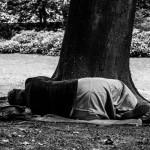 Afterlife (Woodland), Brussels (Photo: Milena Vergara Santiago)